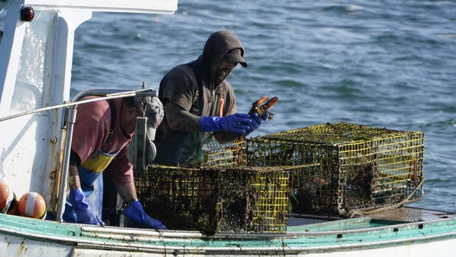 A sternman, right, checks a lobster while fishing, Monday, Sept. 21, 2020, off South Portland, Maine. The state's lobster industry is in the midst of a multi-year boom, and fishermen have caught more than 100 million pounds of the crustaceans for a record nine years in a row.