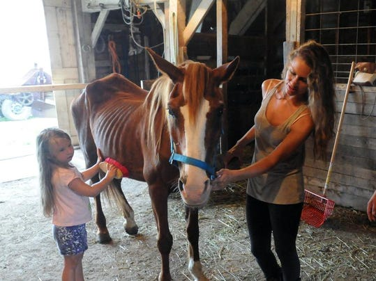 horse abuse 2.JPG