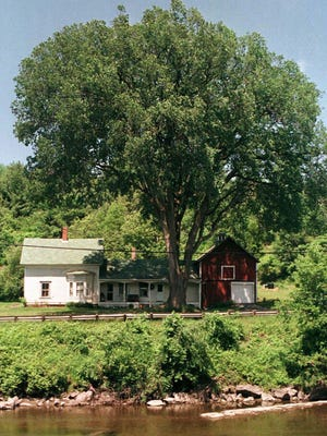 A stately elm tree stands in front of a house in Lyndon, Vt. Dutch elm disease blocks water-conducting tissue within a tree, causing discolored and wilted foliage that will progress until the tree dies.