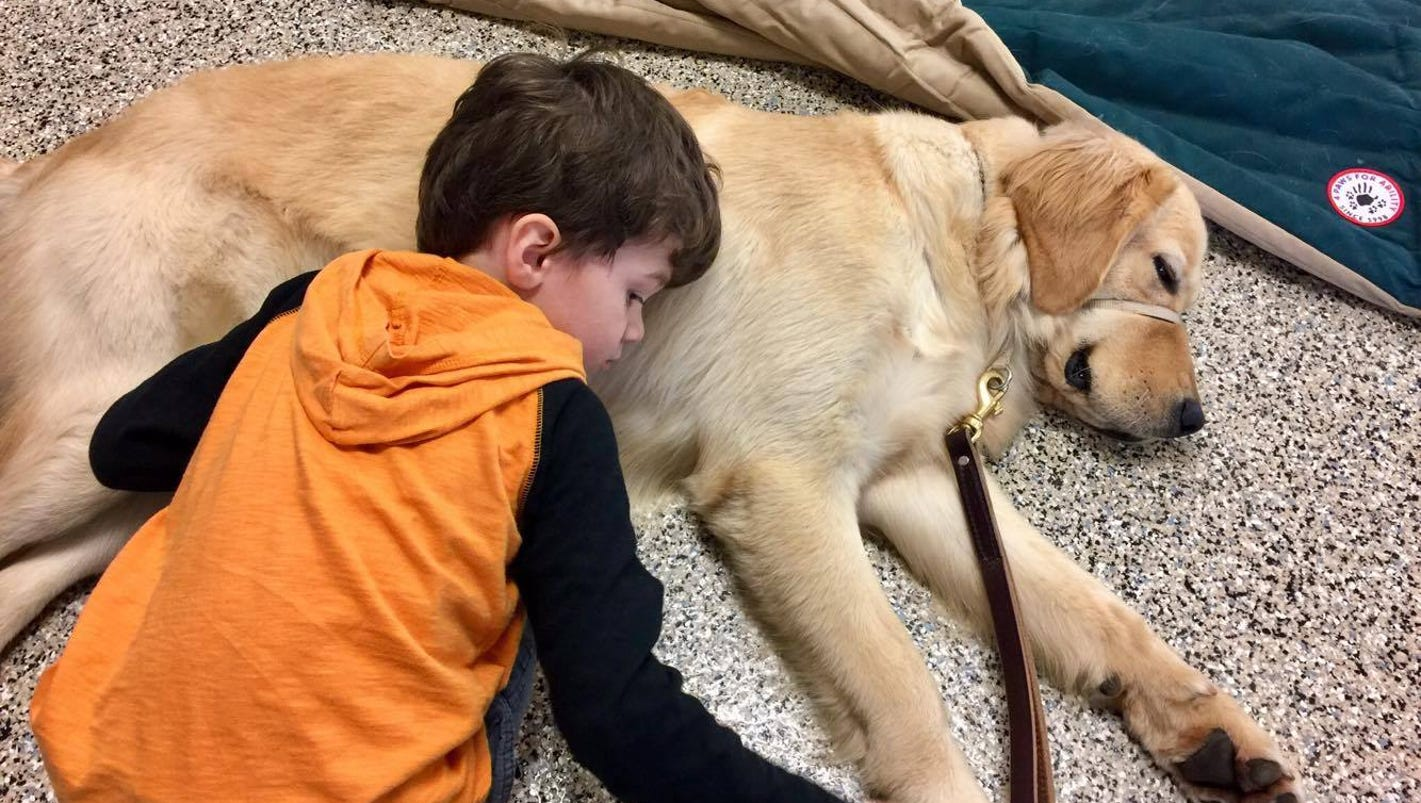 Amazing Moment When Boy Meets His Service Dog - One boy dog heart warming