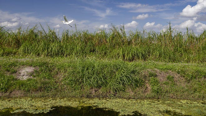 The L-39W canal, in February, runs between Stonebridge Golf and Country Club and the Ag Reserve. The Lake Worth Drainage District wants to raise money by selling off development rights to land next to the canal. They'll consider the plan at a live-streamed meeting Wednesday.