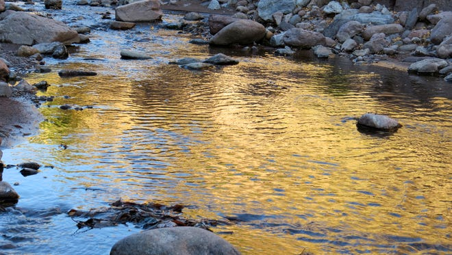 """The photo """"Gold Rush"""" by Ajalaa Claussen, an eighth-grader at ALCS, was recently featured in the 2015 Autumn/Winter edition of """"River Poets Journal."""""""
