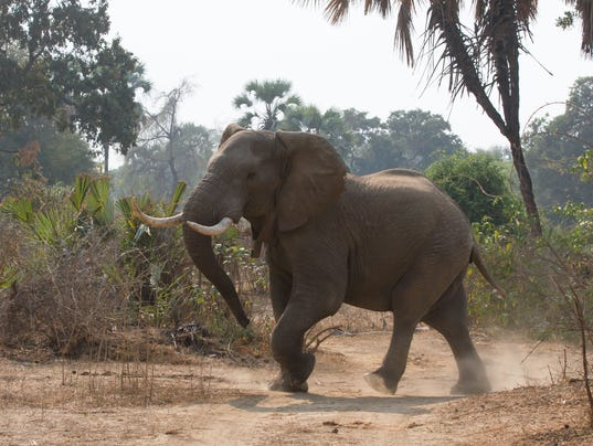 US to allow elephant trophy hunting
