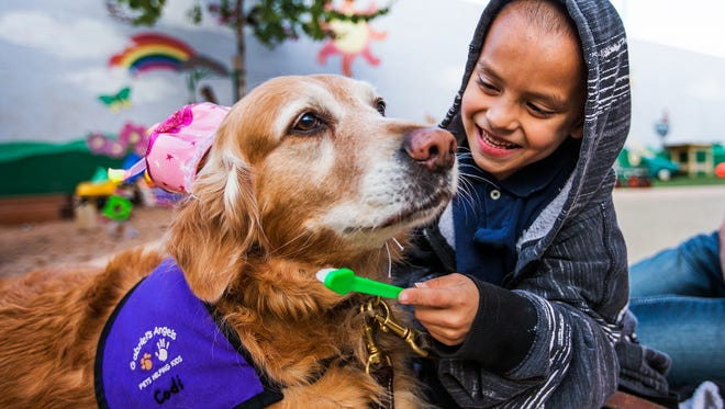 Codi, a 6-year-old golden retriever therapy dog from Gabriel's Angels, gets a good tooth brushing from fellow 6-year-old, Cameron. Two golden retrievers, Codi and Bear, were brought by volunteers to the UMOM shelter in Phoenix to dole out healing therapy for at-risk children, Thursday, January 8, 2015.  The hat on Codi was to celebrate her 10th birthday.