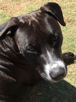 Pet of the Week: Levi