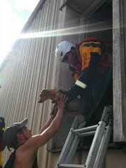 Members of Florida Urban Search and Rescue Task Force 3 and 4 rescue a dog in the aftermath of Hurricane Harvey
