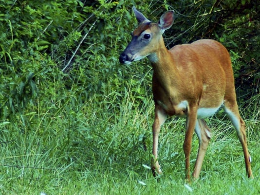 Taking a doe is legal in archery season as long as you have the proper antlerless license.