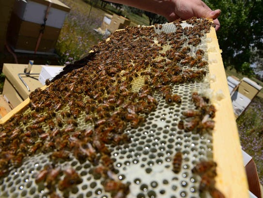 Retired Maj. Brian Rogers, a master beekeeper with