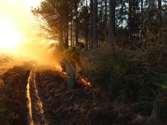 A state Forestry Commission firefighter works to stop
