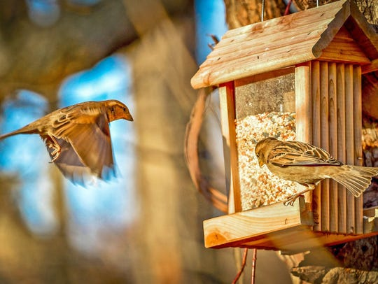 Wild bird feeders often lure in more than just the