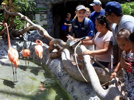 AquaTeen Lauren Reynolds talks to guests about flamingos on Friday, Aug. 28, 2017, at the Texas State Aquarium in Corpus Christi.
