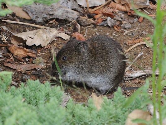 REN0419 mouse in house 1.jpg