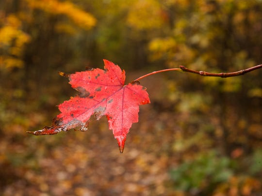 A stubborn leaf clings to life along Riprap trail in