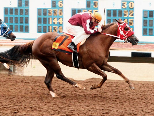 Pretty Woody Jesse, shown here winning the New Mexico Breeders' Futurity with jockey Tanner Thedford aboard at Sunray Park on May 25, 2014.