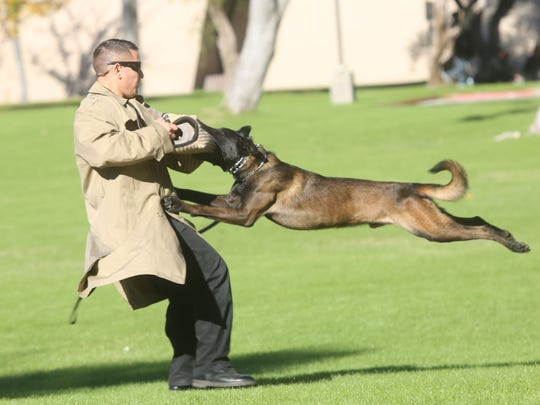The Palm Springs Police Department demonstrates what a police dog is capable of doing, during the Boys & Girls Club of Palm Springs' safety fair on December 13, 2014.