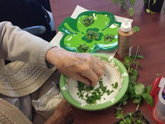 Horticultural Therapy Week Herb Shamrock.jpg