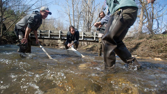 [From left] Preston Welker, Jake Flannick, Ann Marie Traylor, and Devi Sharp kick up rocks to loosen critters to sample Tuesday March 1 in Reems Creek in Weaverville. The Environmental Quality Institute is an Asheville nonprofit monitors the health of local waterways.