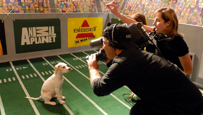 Cameraman Phil Ferzacca photographs puppies during the Animal Planet's Puppy Bowl on Tuesday, Oct. 16, 2007. Puppy Bowl XIII will premiere on Animal Planet on Feb. 5, 2017.
