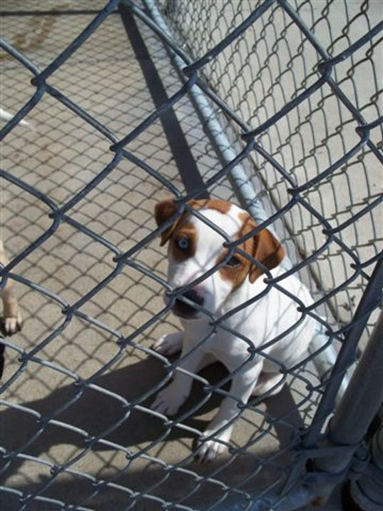 campbell animal shelter dog.jpg