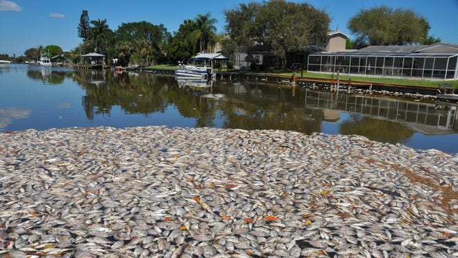 What started as reports of a fish kill of a few hundred last week in Brevard County turned into thousands of a multi-species kill in the Indian River Lagoon.
