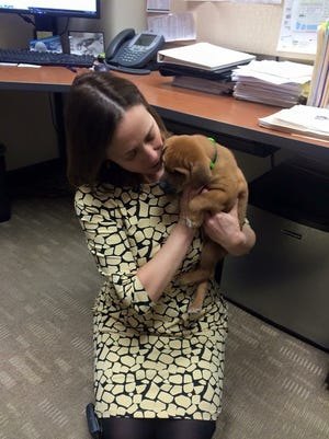 Councilwoman Amy Murray cuddles with an Uber puppy during a visit to City Hall.
