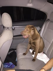 Do you know me? I was found on 23rd Avenue SW and 39th Street.