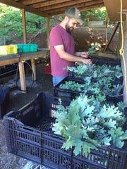 Nate Newsom sorts through produce at Bear Branch Farms.