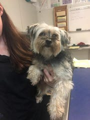 Do you know me?  I was found in front of Reflection Lakes on U.S. 41 E.