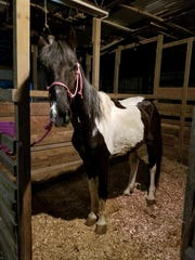 """On June 5, deputies posted a photo of the same horse, which they nicknamed """"Jake."""" They said the horse was examined by the state veterinarian and """"continues to improve and has a healthy appetite."""""""