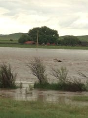 A grizzly bear was swept into Elk Creek near Augusta.