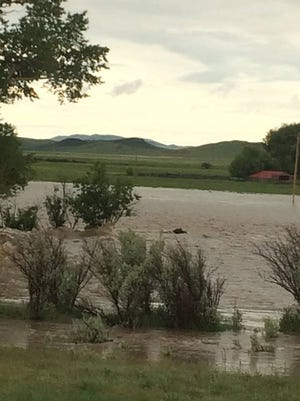 A grizzly bear was swept into Elk Creek near Augusta. The bear eventually made its way out of the flood water.