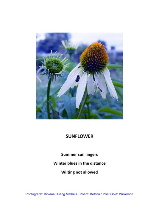 SECOND_SunFlower_1