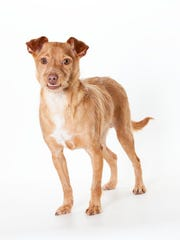 Dwayne, 2-year-old male terrier mix dog. No. 98312.