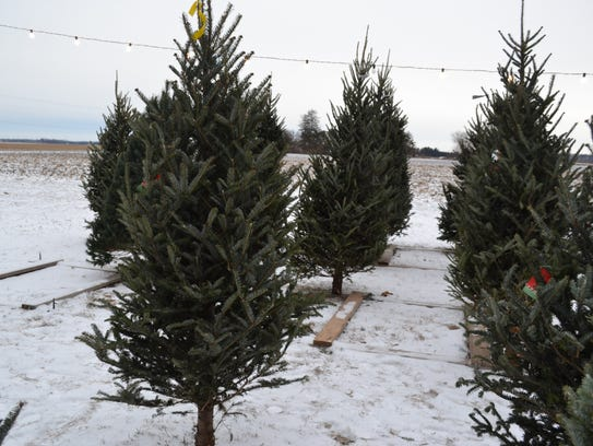 By mid-December, only a few trees remained at Steinberger