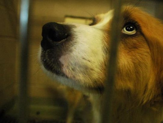 This is one of the 39 dogs found inside a barn in the