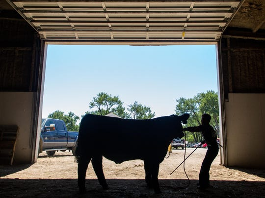 Cascade County commissioners will consider a contract with Conventions, Sports & Leisure International to study alternate locations for livestock activities at Montana ExpoPark in Great Falls.