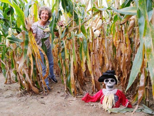 LAF Kent's cucurbits corn maze