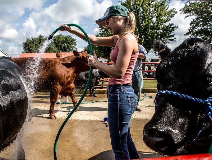 Emily Wogan, 18, of Hebron, washes down her cows after