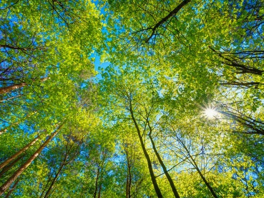Sunny tree canopy