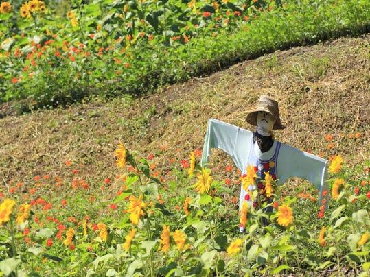 vtd 1003 Master Gardener