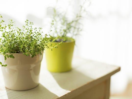 Fall gardening tips tasks and events - Fall gardening tasks ...