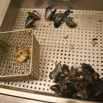 Study says Seattle area mussels contain oxycodone and other pharmaceutical drugs
