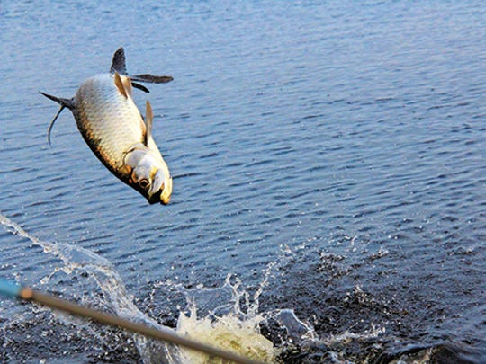 The flats of the Florida Keys are well known for tarpon,