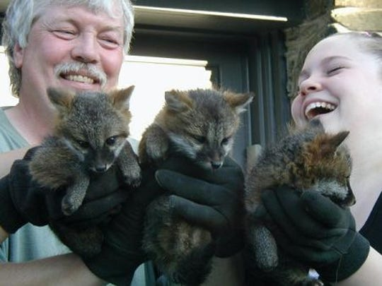 Scott McGillicuddy and his daughter, Ashley, are shown with three fox pups in Poughkeepsie.