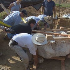 Crews spent the morning working to flip a casing containing the ribs, spine, and shoulder of a prehistoric Columbian mammoth in Ellis County.