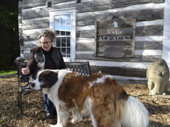 LeAnna Franklin, who owns and operates KeLe Alpacas in Kewaunee with husband Keith Bancroft, plays with her 15-year-old St. Bernard and Portuguese water dog mix Bear outside the log building at the farm. Franklin recently was diagnosed with breast cancer.