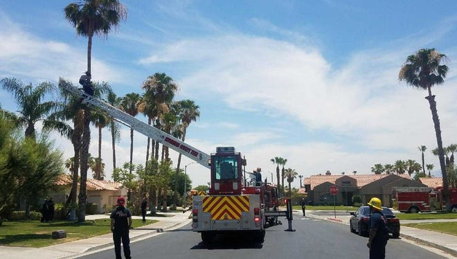 Cal Fire personnel rescue a trimmer stuck atop a 30- to 40-foot palm tree in Palm Desert on Saturday, June 16, 2018.