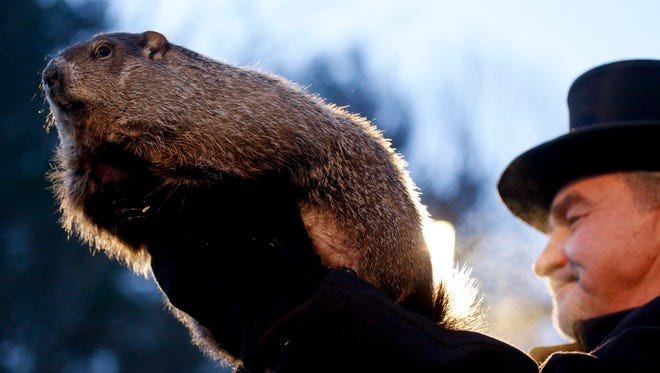 In this Feb. 2, 2016, photo, Groundhog Club handler John Griffiths holds Punxsutawney Phil, the weather predicting groundhog, during the annual celebration of Groundhog Day on Gobbler's Knob in Punxsutawney, Pa.