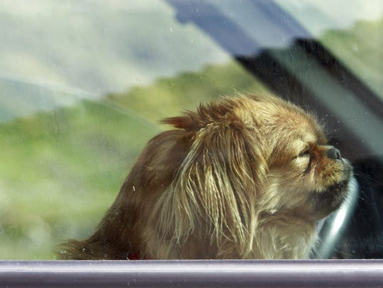 If you see a dog locked in a car during warm weather, call Animal Control.