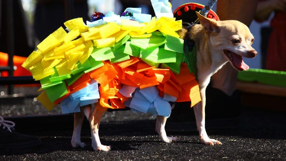 The Taco Festival will include a tiny dog fashion show